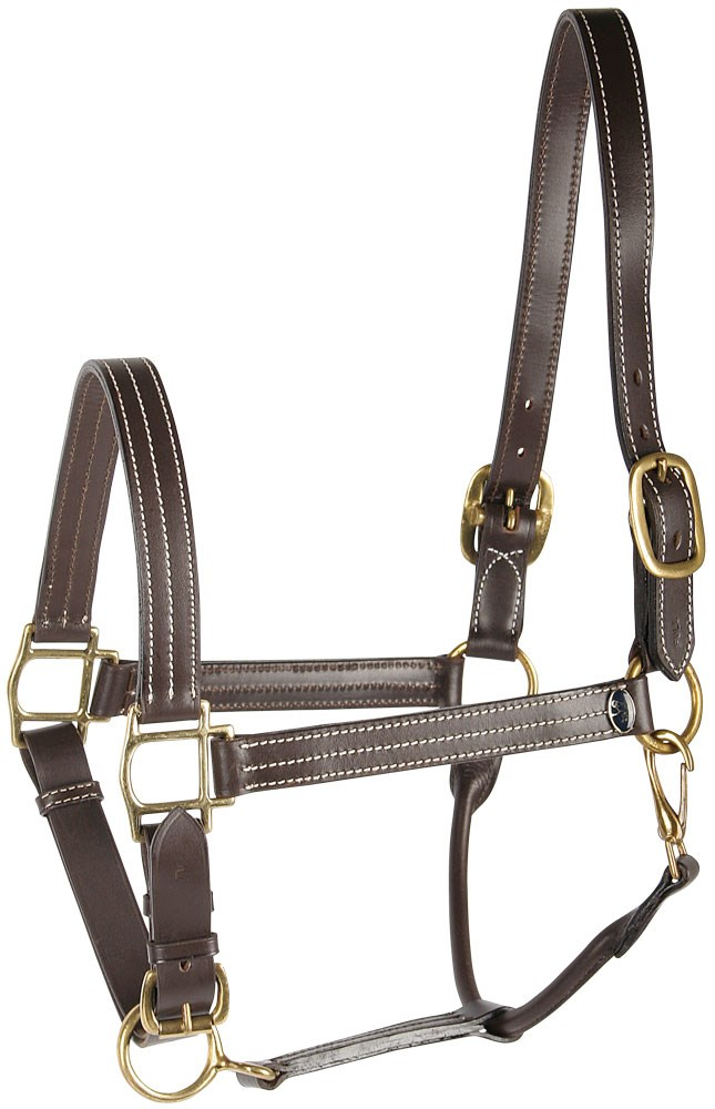 Leather halter elegant